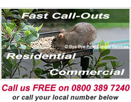Bye Bye Pests - Fast Pest Control Call-Out Service in Basingstoke, Fleet, Reading, Newbury and Andover