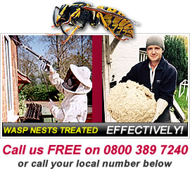 Wasp Nest in Basingstoke, Fleet, Reading, Newbury and Andover